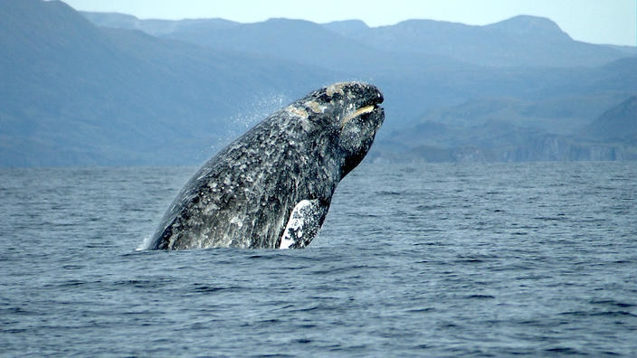 تفسير رؤية الحوت في حلم العزباء والمتزوجة موسوعة المعرفة الشاملة