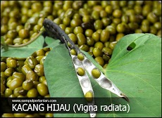Kacang Hijau (Vigna radiata) mengenal manfaat, klasifikasi dan morfologi
