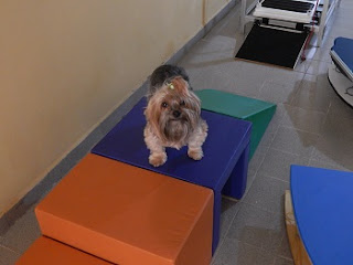 circuito de exercícios para cães