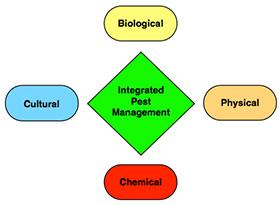 Pest Problems