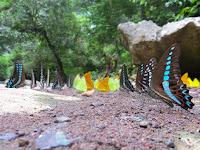 Menikmati Indahnya Kupu-kupu di Taman Nasional Bantimurung