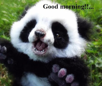 Cute animal good morning images - cute panda