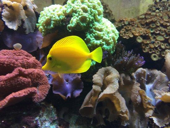25 melhores aquários