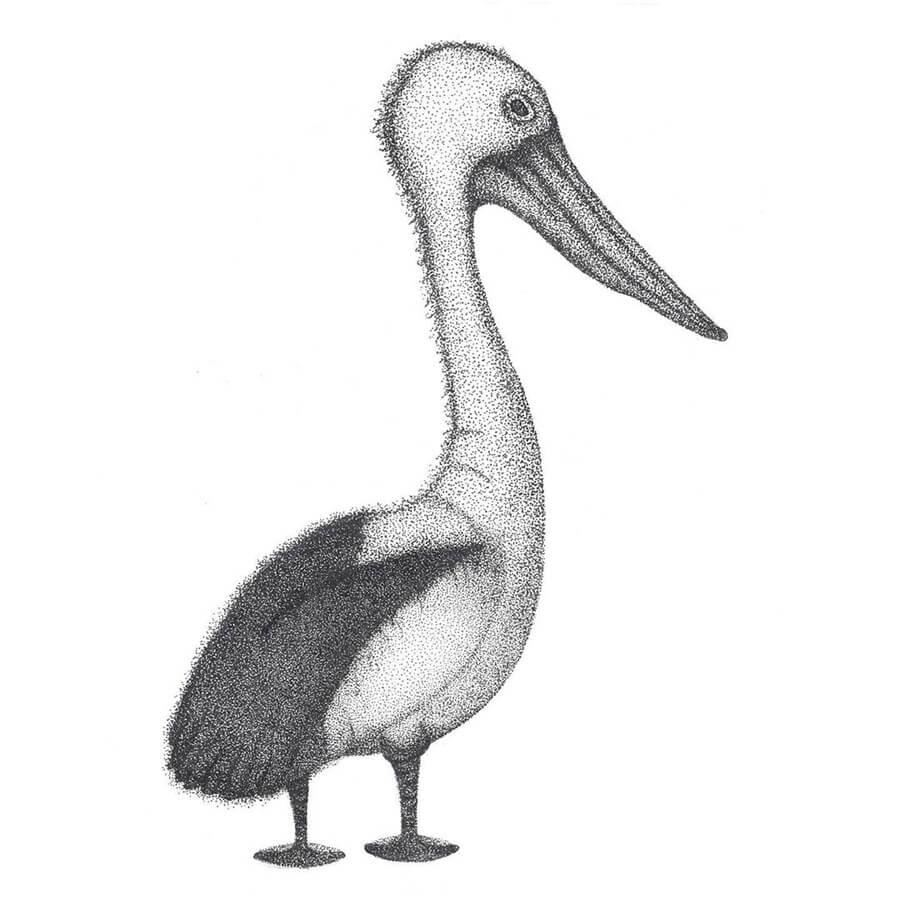 04-Pelican-Renee-www-designstack-co
