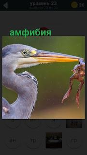 лягушка в клюве птицы амфибия 23 уровень в игре 470 слов