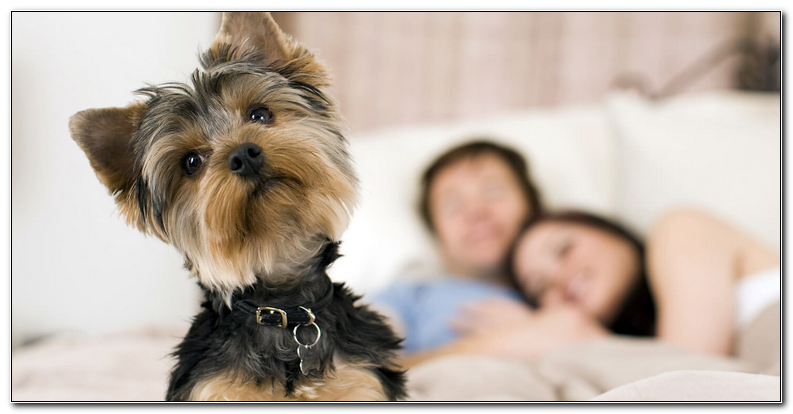 Dog Friendly Hotels Asheville Nc