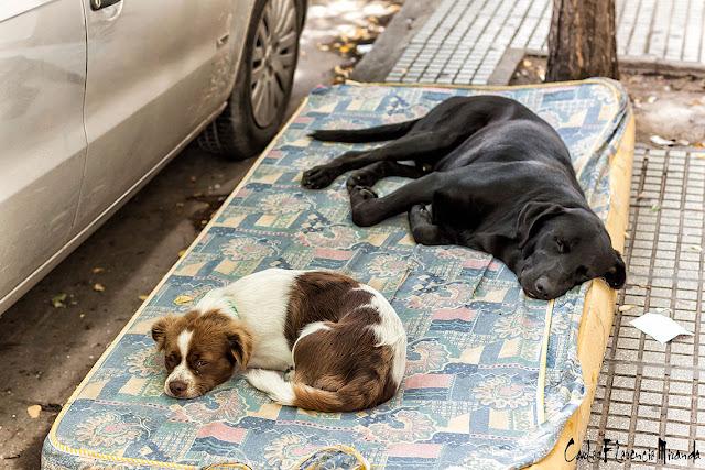 Dos perros durmiendo en un colchón en la vereda.