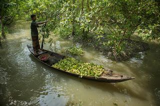 Գուավա շուկան Բանգլադեշում
