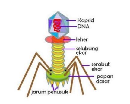 virus-kelas-10