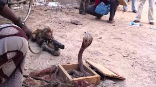 atraksi topeng monyet
