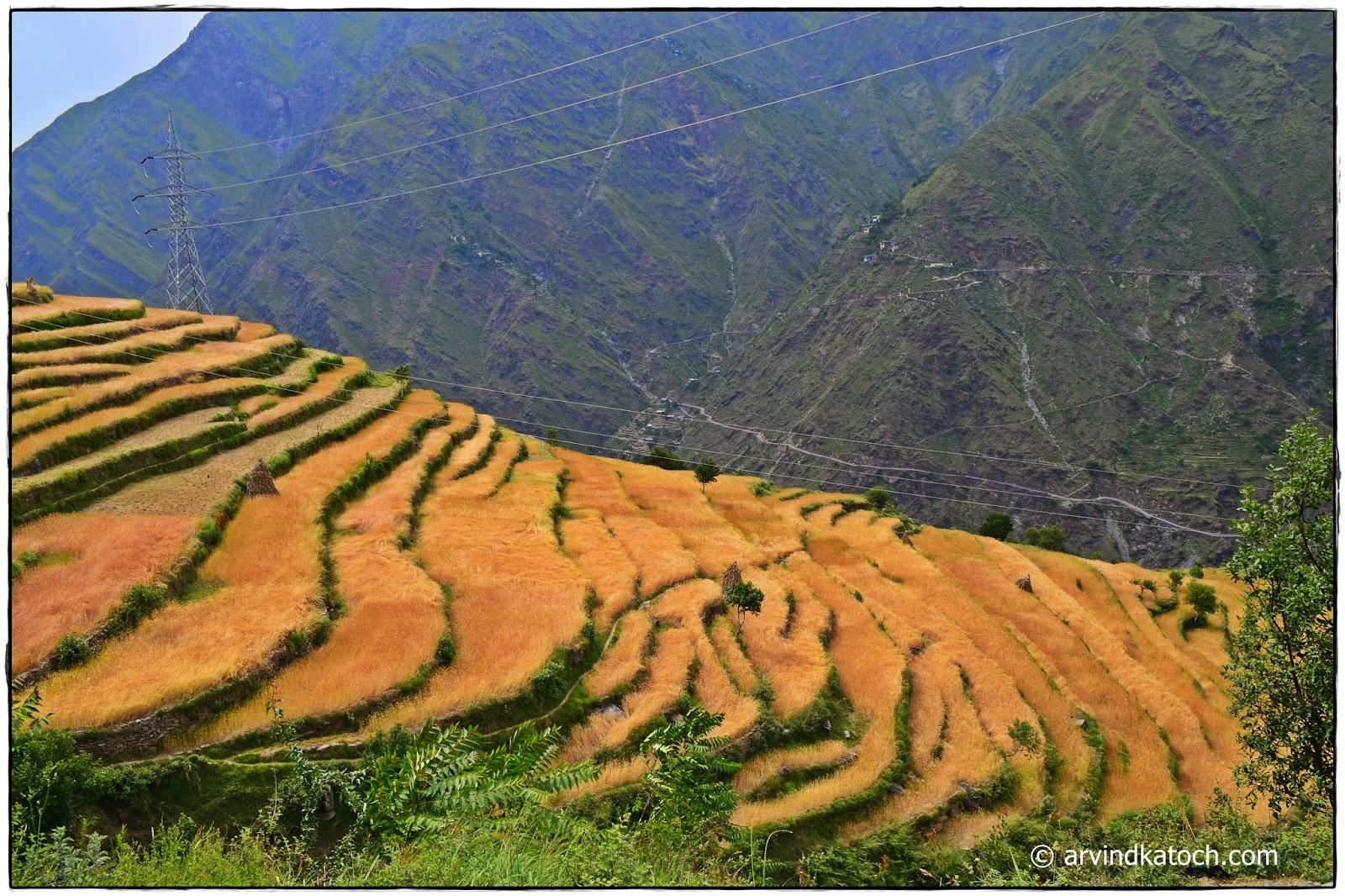 Step Fields, Fields, Hills, Chamba, Himachal