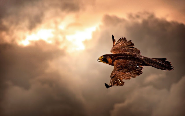 Try your luck at falconry