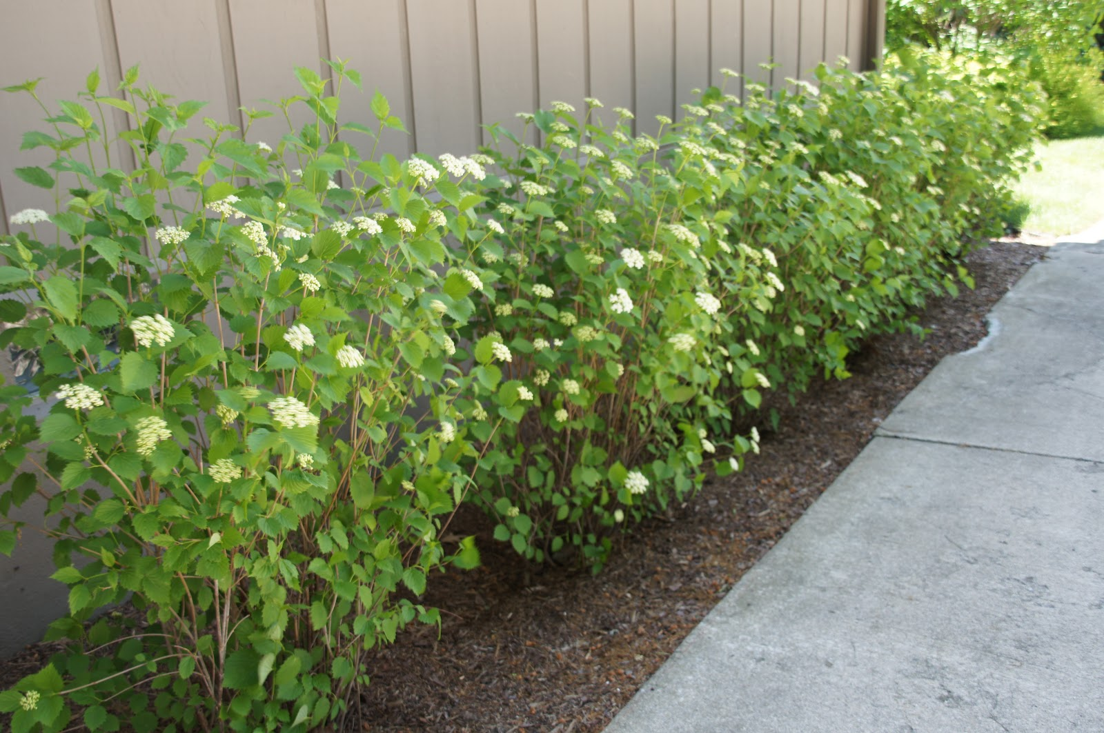 Home And Gardening With Liz Landscape Projects New And Updated