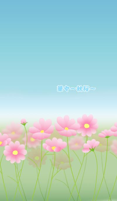 Flowers -cosmos-