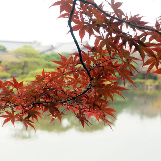 【京都】神苑知秋之蕭瑟