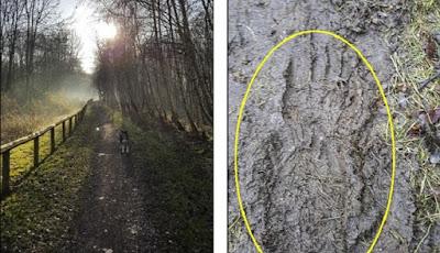 Misteri Penemuan Jejak Kaki Raksasa Mirip Manusia di Hutan