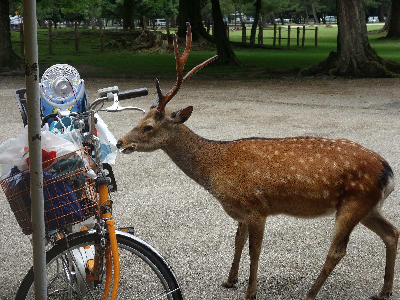 奈良 鹿 餅趕