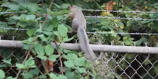 Anti-squirrel spikes