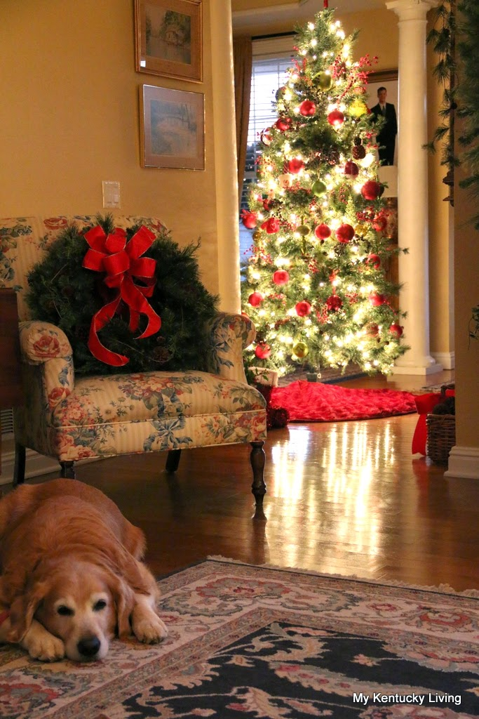 Golden retreiver and his Christmas Tree