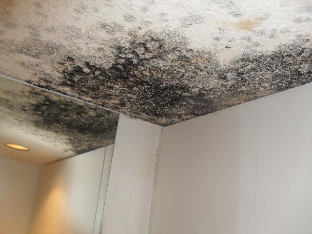Jak usunąć grzyba i pleśń ze ścian, czyli skutków wilgoci w domu