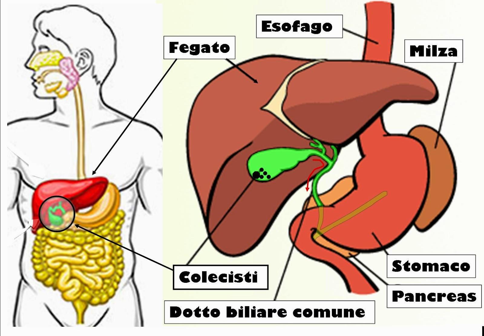 Ecco i 7 alimenti per disintossicare fegato e pancreas