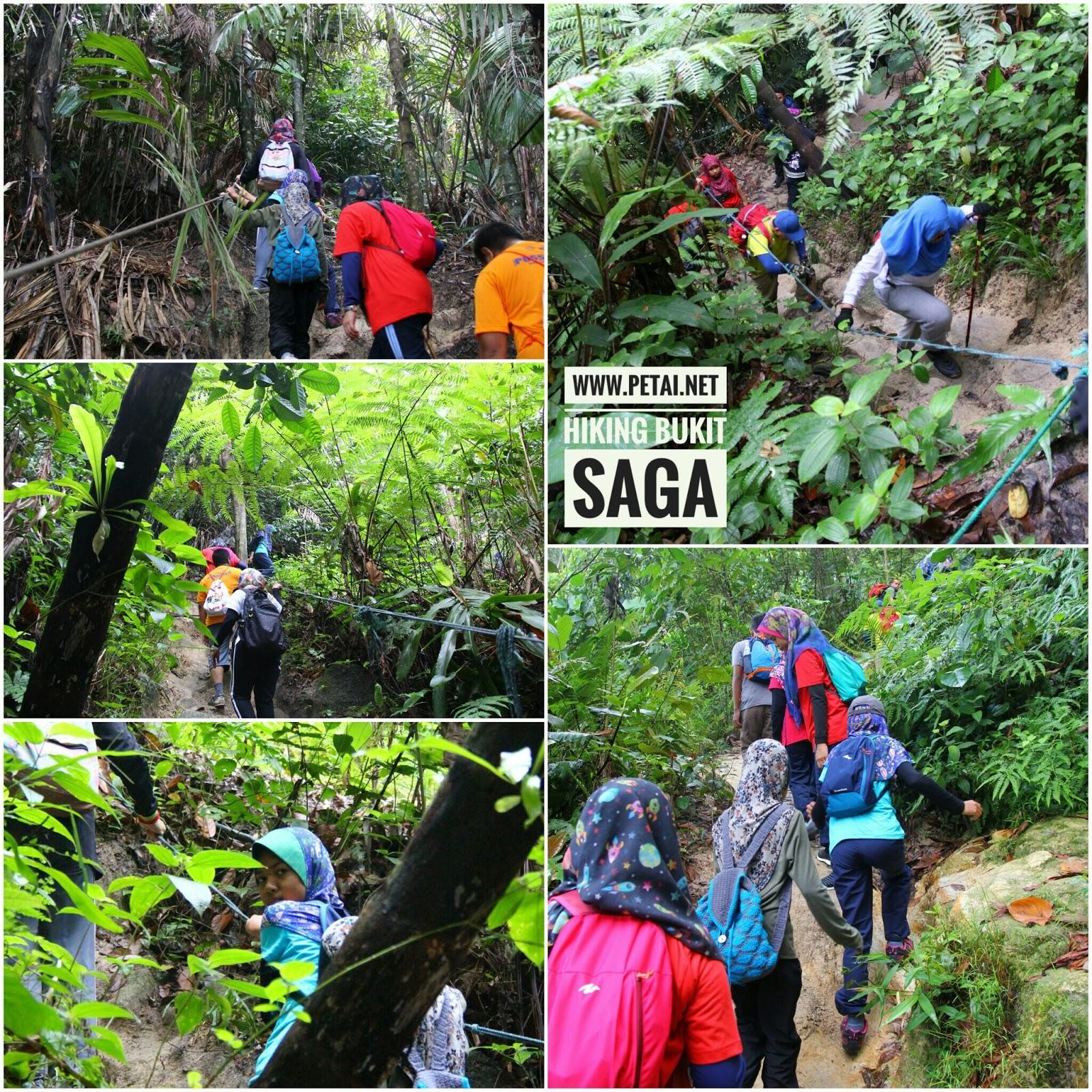 Mendaki Bukit Saga