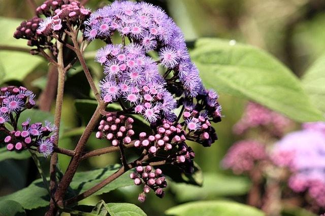 A purple flower at The Royal Botanic Garden