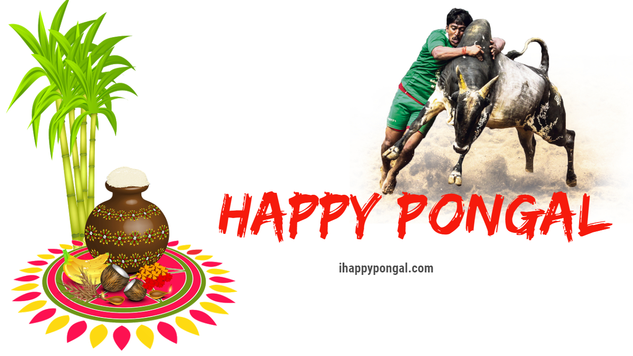 Happy pongal images pongal wishes images pongal greeting cards happy pongal images m4hsunfo