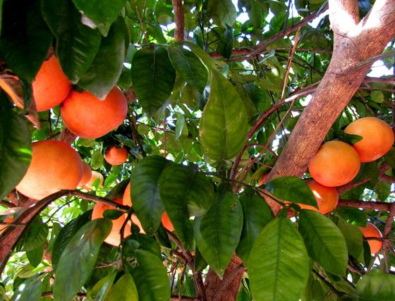 Ecology of fruits