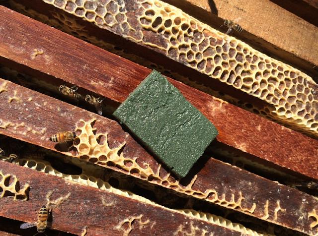 Βιολογικές θεραπείες για τη βαρρόα: Η εμπειρία ενός μελισσοκόμου. Έχασα τα μελίσσια μου...