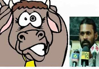 Police operations underway to arrest Kondaya on allegation of having abused cow! Saman Jayalath