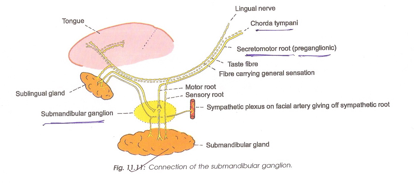 Diagram Of Bone With Labels Wizdent Anatomy Of Head Amp Neck
