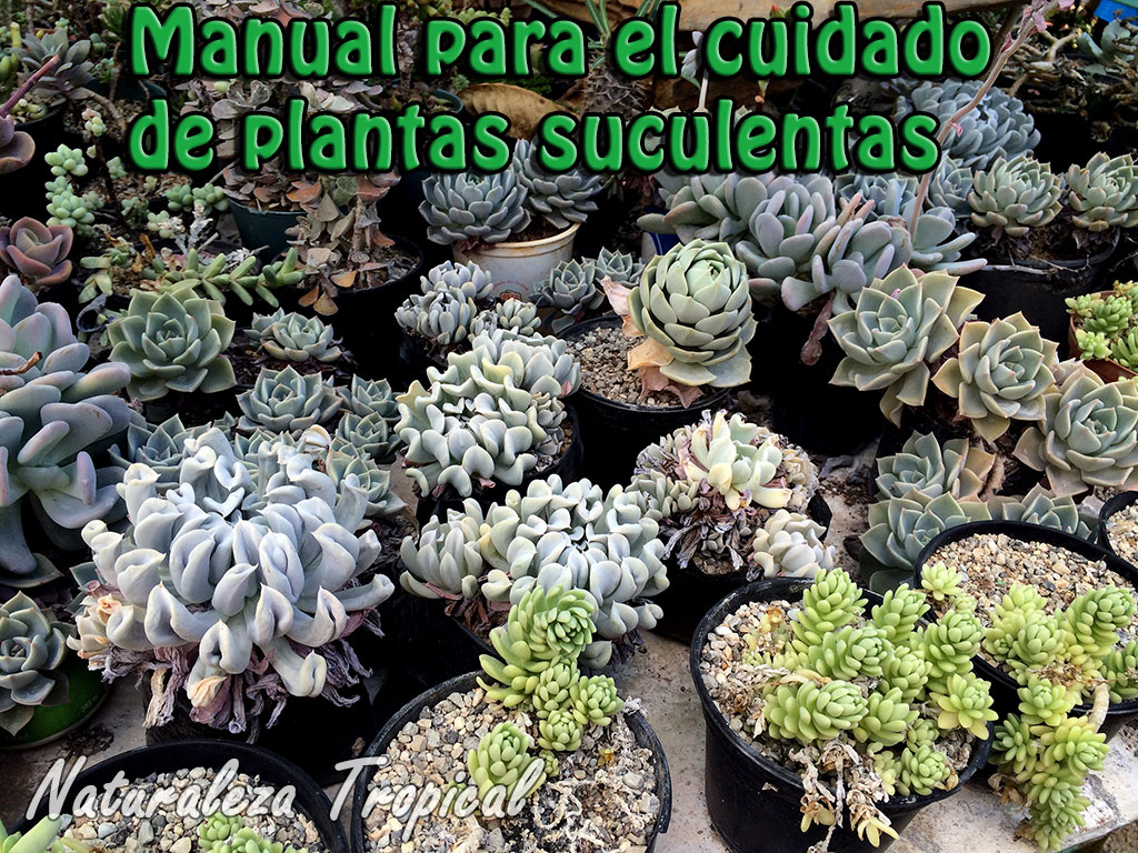 Plantas suculentas tipos related keywords plantas - Cuidado de plantas de interior ...