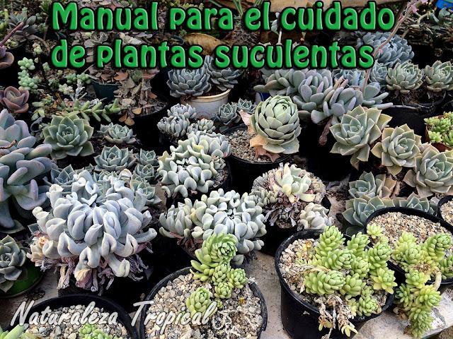 Manual para el cultivo de plantas suculentas