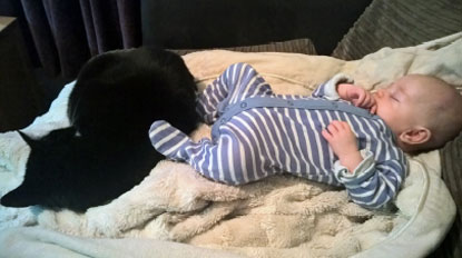 Cat and baby resting together