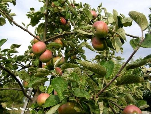 Co by tu zrobić z tymi jabłkami?!