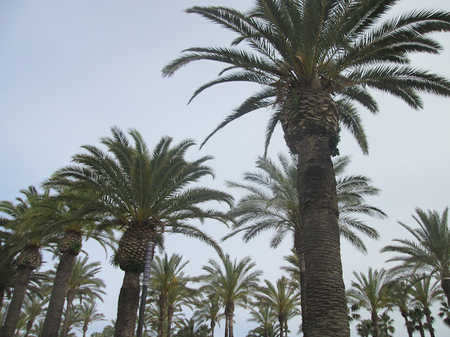 Hiszpania, Katalonia, Catalonia, Cambrills, Costa Dorada
