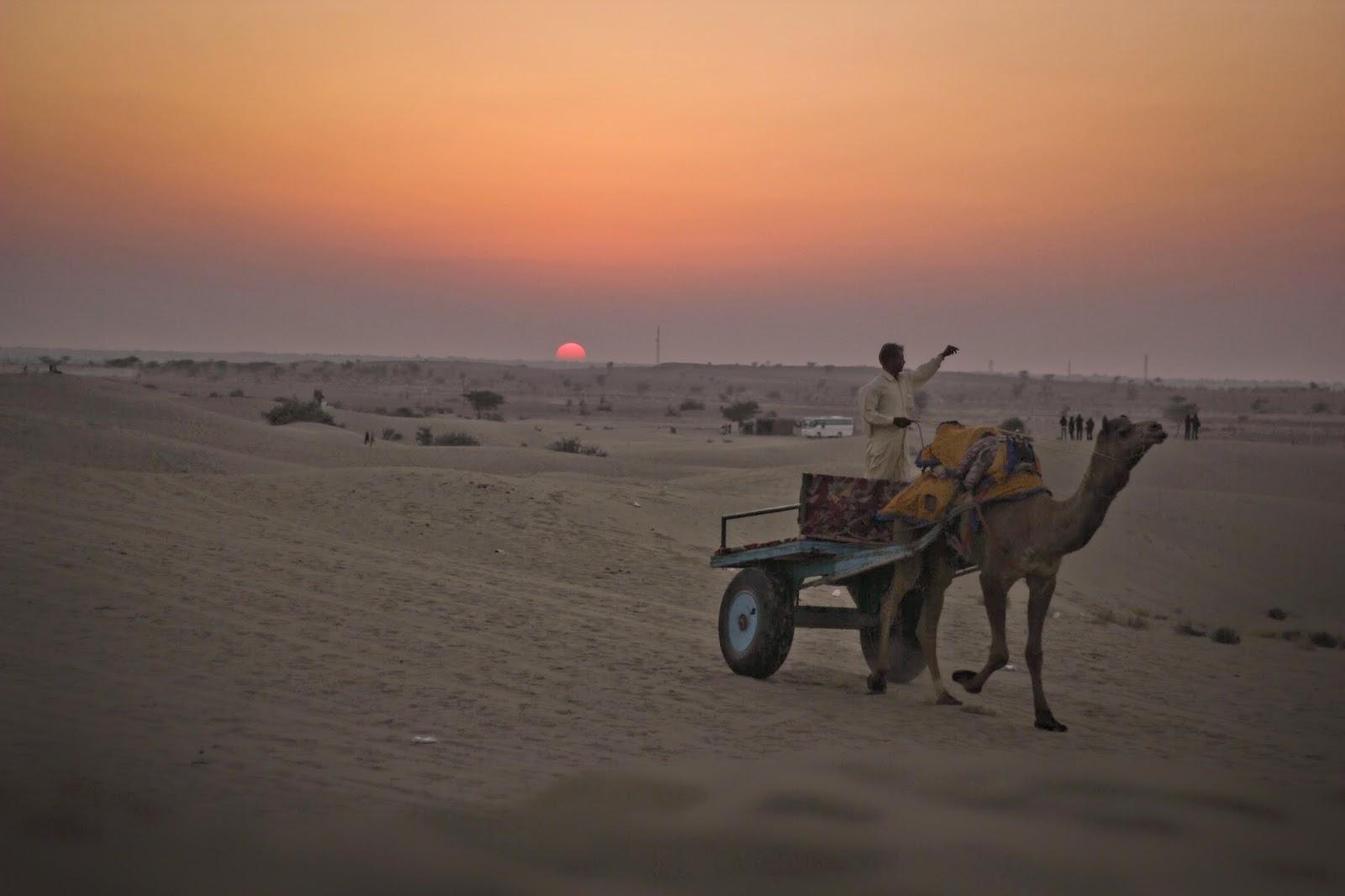 A man driving a camel cart at the Sam Sand dunes, Jaisalmer