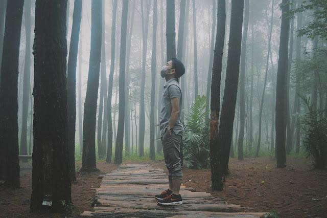 foto suasana di hutan pinus imogiri