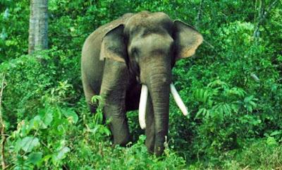 Fungsi hutan bagi kehidupan - berbagaireviews.com
