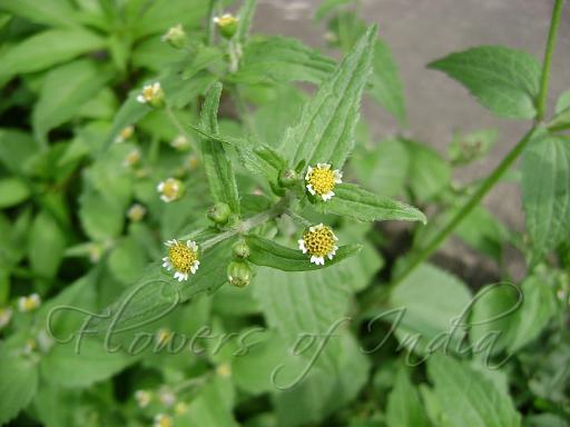 Medicinal Herbs Names And Uses Part 3 Global Hinduism