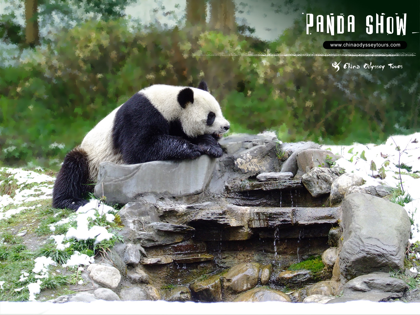 Very Cute And Beautiful Wallpapers Unique Wallpaper Amazing Pandas