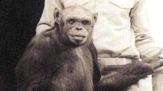 Científico afirma que la historia del Humanzee, un híbrido humano-chimpancé, es cierta