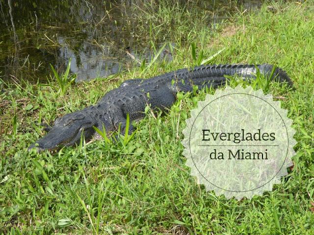Escursione da Miami al parco delle Everglades: un alligatore