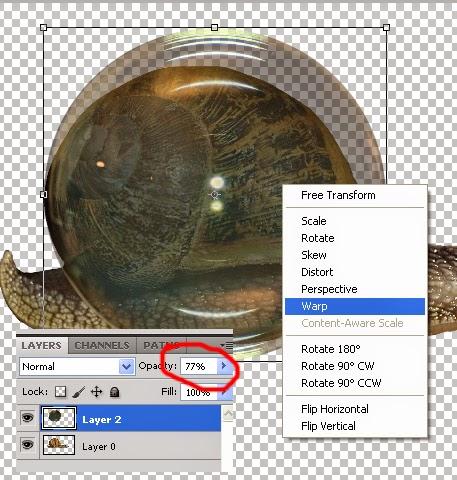manipulasi hewan photoshop