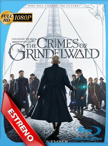 Animales Fantásticos: Los Crímenes de Grindelwald (2018) HD [1080p] Latino Dual [GoogleDrive] TeslavoHD
