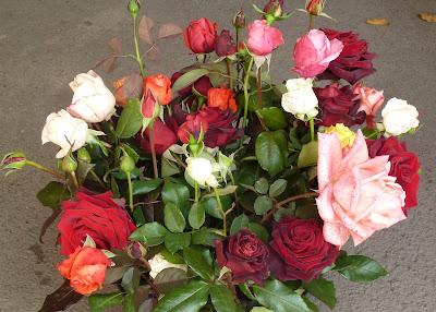 срезанные розы перед заморозками