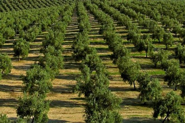 Εφάπαξ επιδότηση 9.000 ευρώ για φύτευση δένδρων