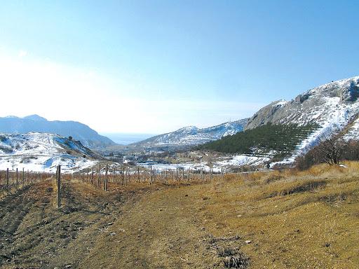 Виноградники в Кутлакской долине