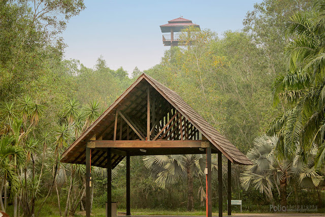 Menara Tinjau Paya Indah Wetlands
